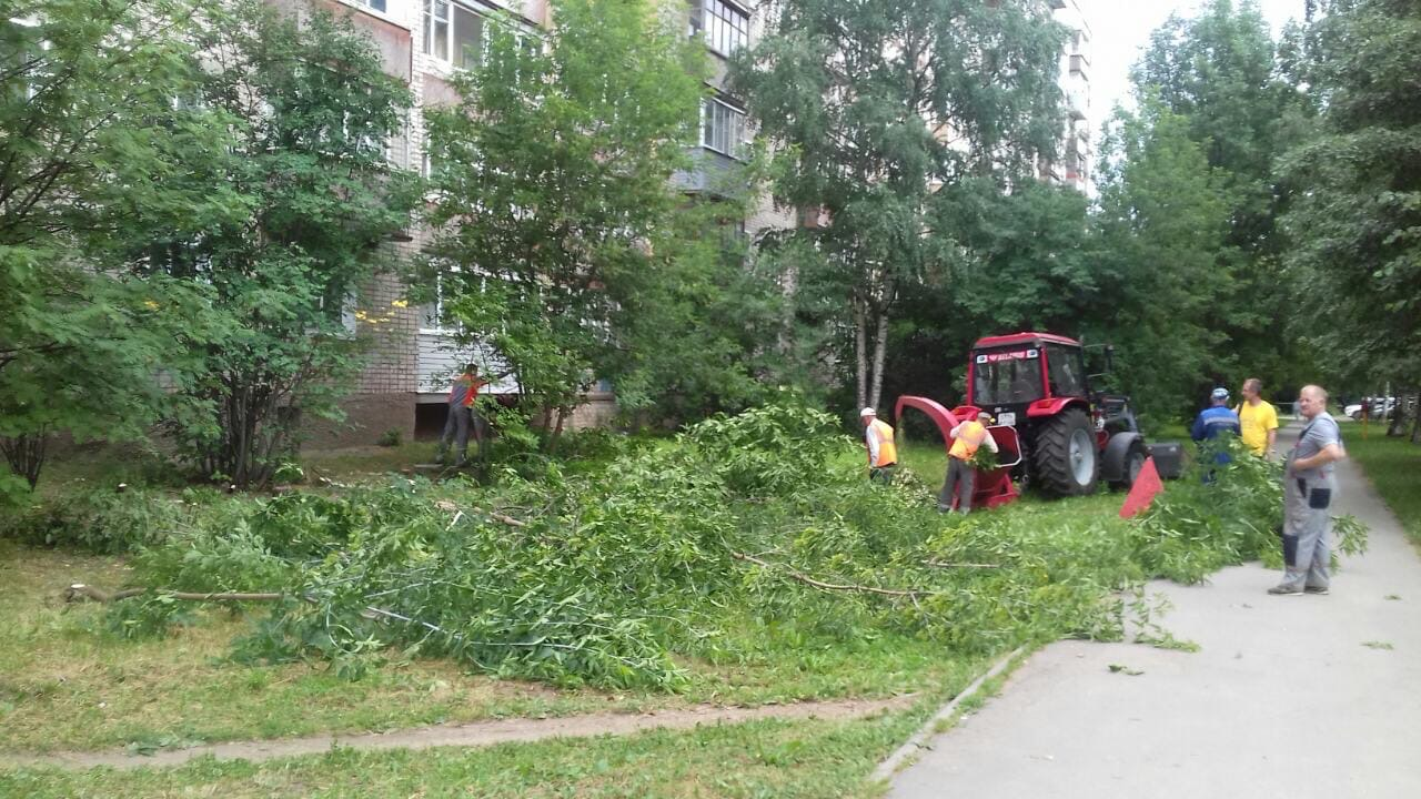 Проспект Строителей дом 36 снос аварийных деревьев