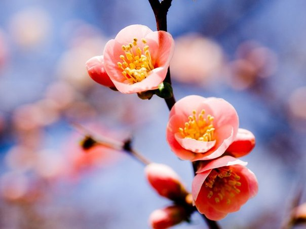 Красивая Весна Обои На Стол
