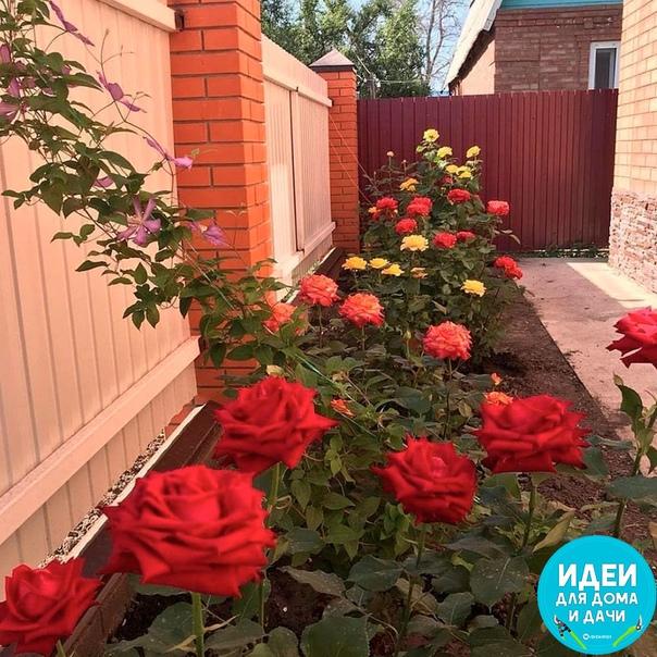 Хороше решение, посадить цветы вдоль забора.