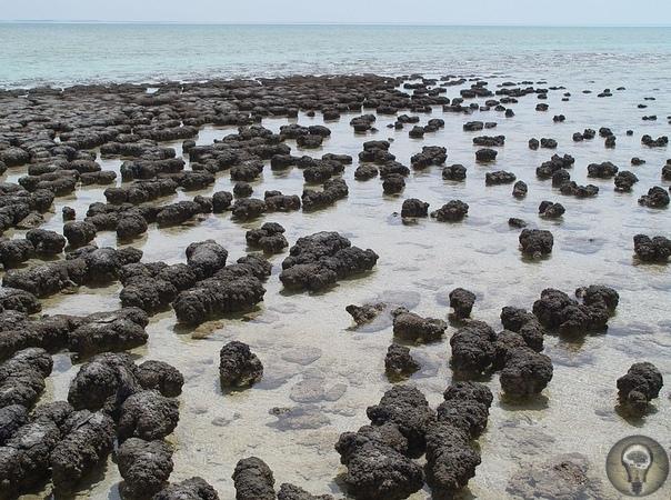 Водный мир: какой была Земля более 3 млрд лет назад Ученые нашли доказательство того, что Земля была покрыта глобальным океаном, который превратил планету в «водный мир» более 3 млрд лет назад.