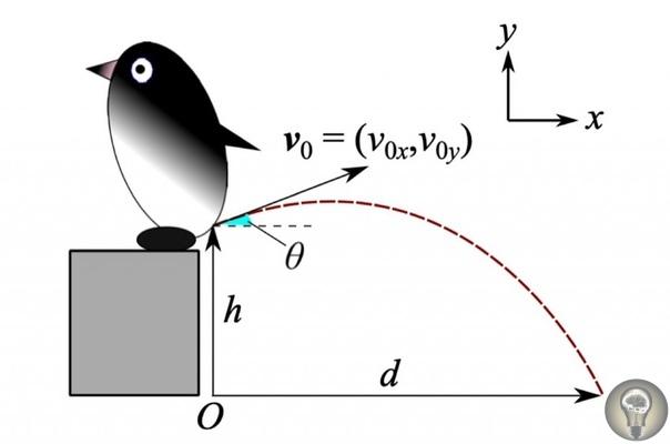 Ученые наконец-то выяснили, на сколько именно пингвины способны выстрелить калом (на полтора метра