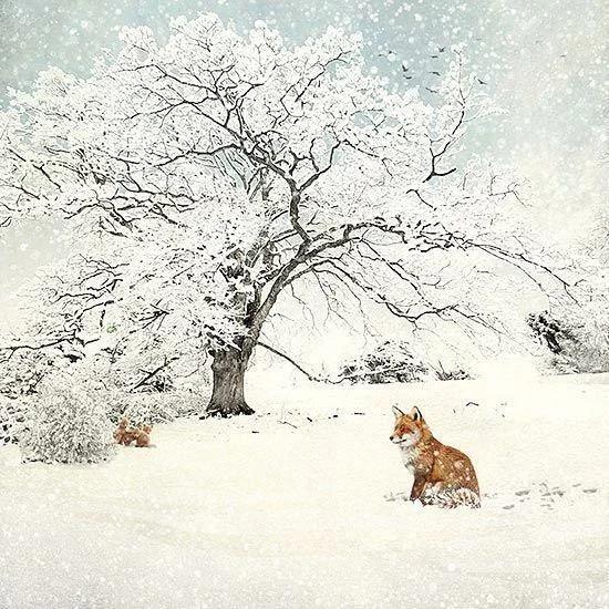Английская художница Джейн Кроутэр (Jane Crowther начала свою карьеру в 1986 году. Получив образование в области иллюстративного искусства, с головой погрузилась в производство открыток.
