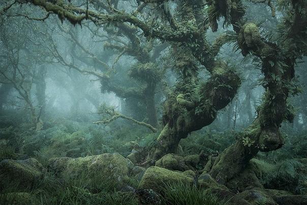 Природа Британии настолько красива, что в средневековье государство развивало институт Королевского леса Он отдавал монарху в пользование самые живописные и богатые места по всему острову. Закон